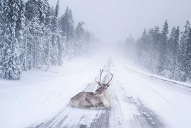 Nádhera za polárním kruhem. 20 důkazů, proč mají v Laponsku ty nejkrásnější Vánoce