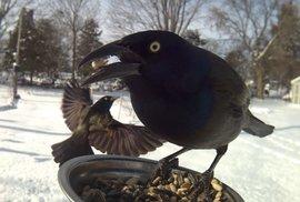 Ptáci vyfocení fotopastí v krmítku