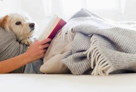 Země psům zaslíbená: Dvě pětiny Čechů mají doma psa, do postele si je pustí dva z pěti majitelů