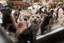 Taširodžima: Japonský ostrov, na kterém žije šestkrát více koček, než lidí