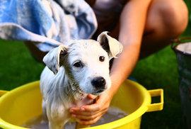 Babiš si pořídil štěně a preference ANO vzrostly o tři procenta. Víme, co udělá PR tým,…