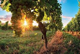 Cyklostezky mezi moravskými vinohrady jsou ideálním cílem pro milovníky vína i sportu