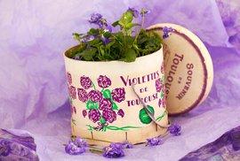 Violka parmská (Viola parmensis)