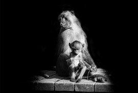 """""""Když byste se mě zeptali dnes, odpověděl bych, že bychom se k nim neměli chovat jako k pouhým zvířatům. Ale měli bychom o nich přemýšlet jako o bytostech plných emocí, které jsou si vědomi vlastní existence,"""" říká Pawel Bogumil."""