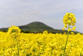 Proč máme žluté lány? Proč se Českem šíří sucho? Nenasloucháme těm, kdo skutečně nekecají a makají