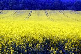 30 hektarů a dost. Obří zemědělské lány monokultur, které ničí půdu a vysouší…