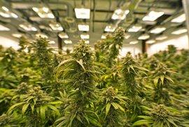 Duch narkobarona Pabla Escobara se vrací: Na stejných místech v Kolumbii pěstují marihuanu firmy z Kanady