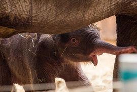 Potěžkejte si sloní stehno a roztočte středověký jeřáb