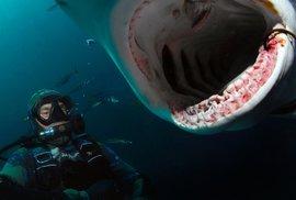 Potápěč a fotograf žraloků Richard Jaroněk: Člověk je největší parazit na planetě Zemi