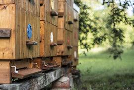 Na jaké adrese bydlí včela? Zveřejněný adresář úlů vyděsil včelaře, záměr navíc nebude úplně fungovat