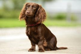 Jak prodloužit psí život i o několik let? Díky pár tipům se dá předejít nemocem…