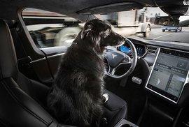 Tohle autonomní auto zvládne řídit i pes!