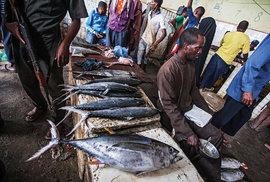 Kromě drobných tresek se vtržnici nejvíce obchoduje smalými žraloky, tuňáky amečouny.
