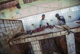 Válkou zdevastované Somálsko: Podívejte se na poslední rybí trh v Mogadišu