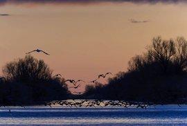 Ptáci na Dunaji