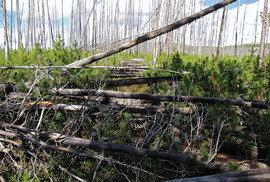 Montana byla nakonec nejtěžší. Sníh, pak zase popadané stromy...