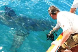 Adrenalinové hrátky André Hartmana aneb Jak chytit žraloka za nos