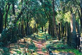 Na hřbitově je na 9000 náhrobků