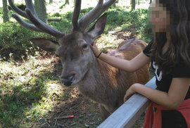 Názor myslivce: Zastřelit jelena Standu? Zvířata nejsou naši kamarádi, za svůj osud…