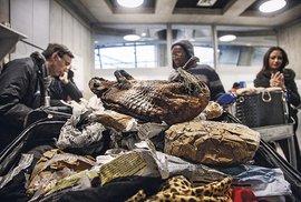 Fotograf a publicista Karl Ammann: Na záchranu divokých zvířat už je pozdě