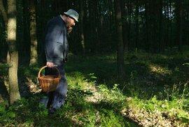 Češi bohatnou i na sběru hub či borůvek. Loni si přinesli z lesů plody za 6,64 miliardy…
