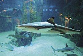 1) Ve světě žraloků