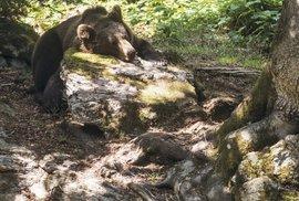 Lesní zoo nabavorské straně Šumavy