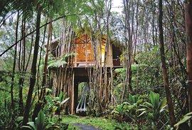 Fern Forest, Hawaii