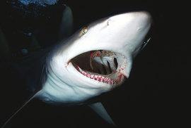 Potápění se žraloky aneb Když vám čtyřmetrové monstrum sežere kameru