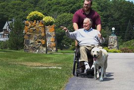 Dojemné fotografie asistenčního psa zemřelého prezidenta Bushe. Labrador Sully hlídá i rakev
