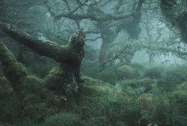 Tolkienova zhmotnělá fantazie: 7 tisíc let starý anglický hvozd na tajuplných fotografiích