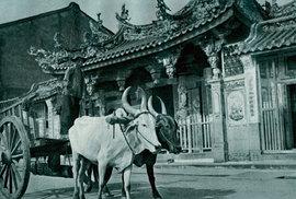 J. Havlasa: Čínský chrám v Singapuru, 1913.