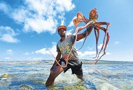 Lovci chobotnic se brodí lagunou, kde je za odlivu vody asi tak po kolena. Nejoblíbenějším způsobem jeich zpracování je sušení na slunci. Podél celého pobřeží visí na tyčích stovky hlavonožců.