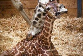 Kuk! Já jsem nový žirafák Matěj.
