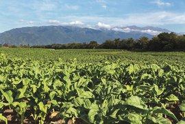 Tabákoví (ne)baroni aneb Jak se žije na plantážích se zeleným zlatem na severu Argentiny