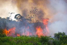 Pokrytecky kritizujeme Brazilce za kácení deštných pralesů. Oni ale dělají jen nutnost, stejnou jako naši předci