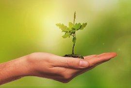 Na podzim začnou Češi sázet 10 milionů nových stromů, za každého jeden