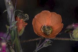 O čem včely sní, když náhodou spí