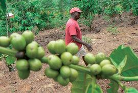 Za spravedlivou kávou do Tanzanie aneb Jak funguje tržní systém fair trade?