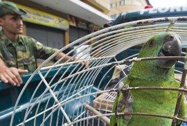 Pašeráci drog vycvičili papouška, aby varoval před policií. U výslechu ani nepípnul