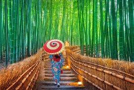 Bambusový les nedaleko japonského města Kjótó.