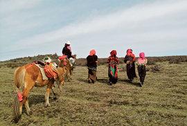 Jarca günbu: Parazitující houba jak vystřižená z hororu se stala ekonomickým zázrakem Tibetu