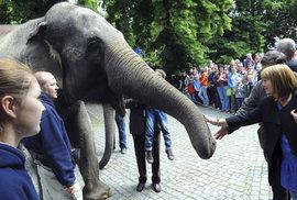 Takhle slavila slonice Gulab před 10 lety své 50. narozeniny.