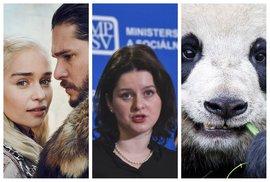 Hra o inteligenci televizního diváka, bláznivé výroky socanů, jeden motýle za tři pandy