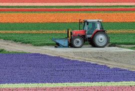 Snad největší koncentraci rozkvetlých tulipánů i jiných jarních květin najdete v nizozemském květinovém parku Keukenhof na okraji městečka Lisse.