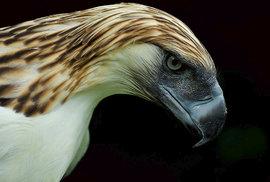 Fascinující fauna filipínského souostroví: Poslední křídla nad pralesem