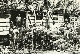 Banánové republiky: Jak United Fruit Company ovládla Latinskou Ameriku
