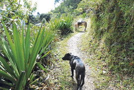 """""""Během treku s výhledem na Machu Picchu jsme za celý den potkali jen domorodce s mulou – pecka!"""""""