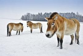 Úchvatné fotky přírody vás chytí za srdce. Přijďte na výstavu porotců Czech Nature …