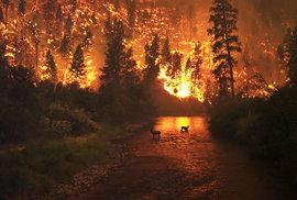 Požáry nejsou jen katastrofa, pro přírodu mají i pozitivní důsledky. Sibiři mohou…